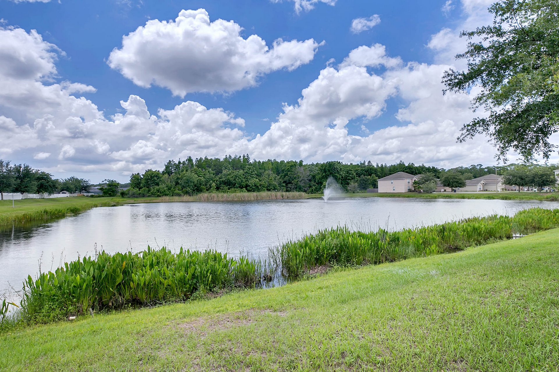 3205-Bellericay-Ln.-Land-O-Lakes--FL-34638--13--Back-Yard-2.jpg