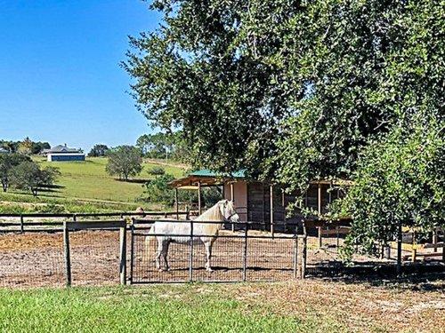 18913-Starcrest-Ln--Clermont--FL-34715---Horse.jpg