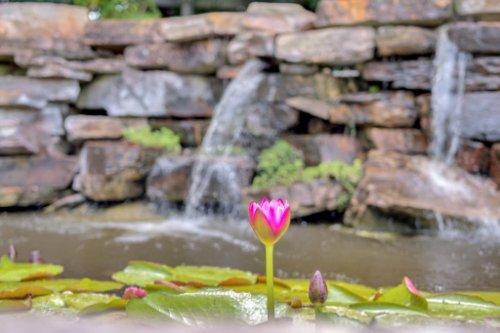 27701-Cypress-Glen-Ct--Yalaha--FL-34797----41---Backyard.jpg